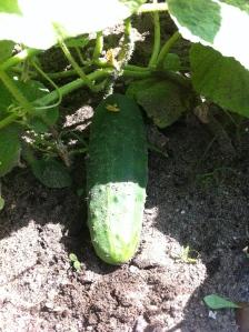 Future pickle!