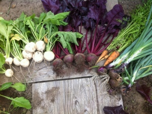 My root veggie family!
