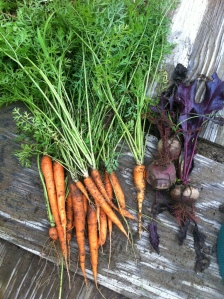 My first carrots!  With a side of beets!